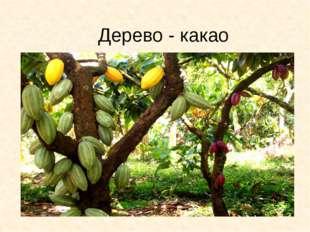 Дерево - какао