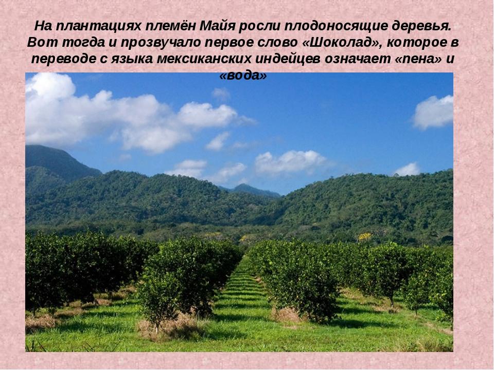 На плантациях племён Майя росли плодоносящие деревья. Вот тогда и прозвучало...