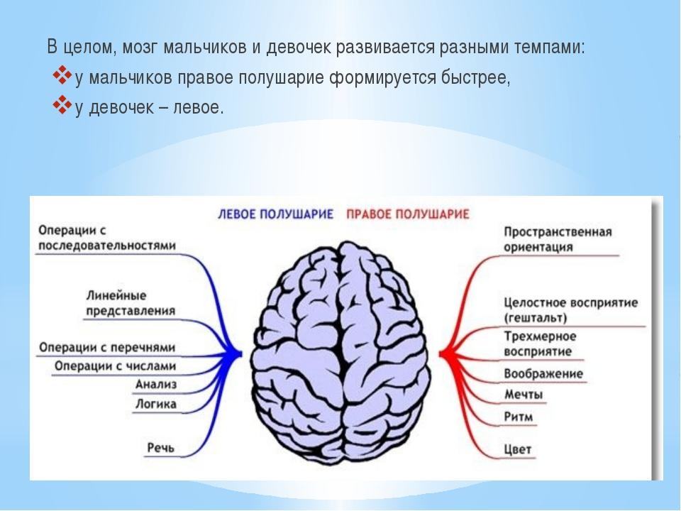 В целом, мозг мальчиков и девочек развивается разными темпами: у мальчиков пр...