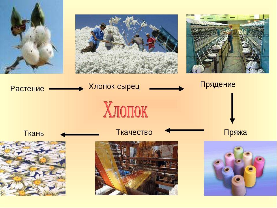 Растение Хлопок-сырец Прядение Пряжа Ткачество Ткань