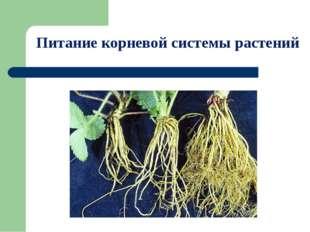 Питание корневой системы растений