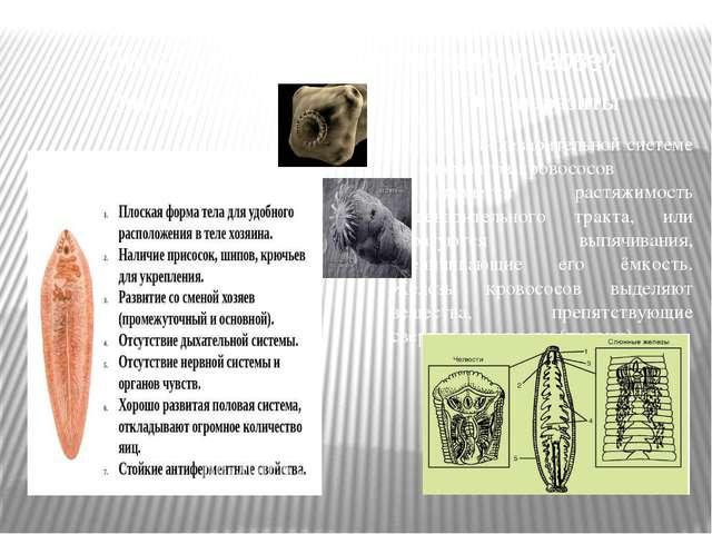 Приспособления к паразитизму у червей Эндопаразиты Эктопаразиты В пищеварител...