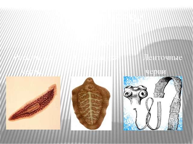 ПЛОСКИЕ ЧЕРВИ Класс Ресничные Сосальщики Ленточные черви черви