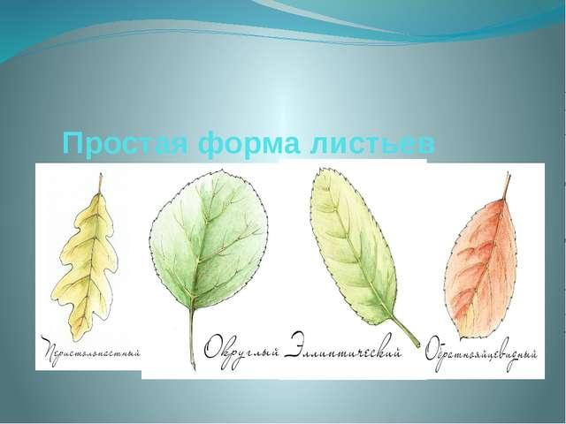 Простая форма листьев