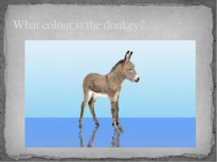 What colour is the donkey?