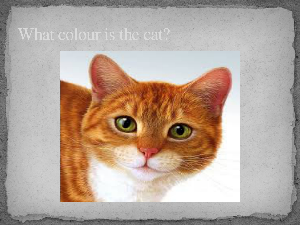 What colour is the cat?