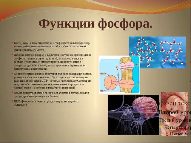 Функции фосфора. Кости, зубы: в качестве компонента фосфата кальция фосфор яв...