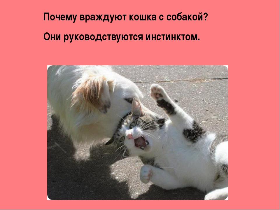 Почему враждуют кошка с собакой? Они руководствуются инстинктом.