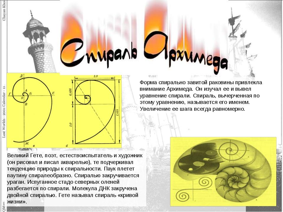 Форма спирально завитой раковины привлекла внимание Архимеда. Он изучал ее и...