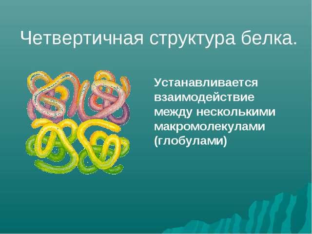Устанавливается взаимодействие между несколькими макромолекулами (глобулами)...