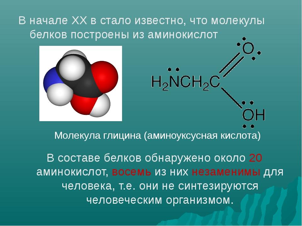 В начале ХХ в стало известно, что молекулы белков построены из аминокислот В...