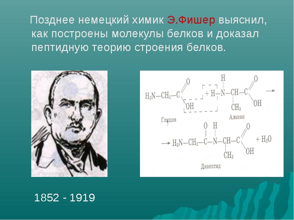 Позднее немецкий химик Э.Фишер выяснил, как построены молекулы белков и дока...