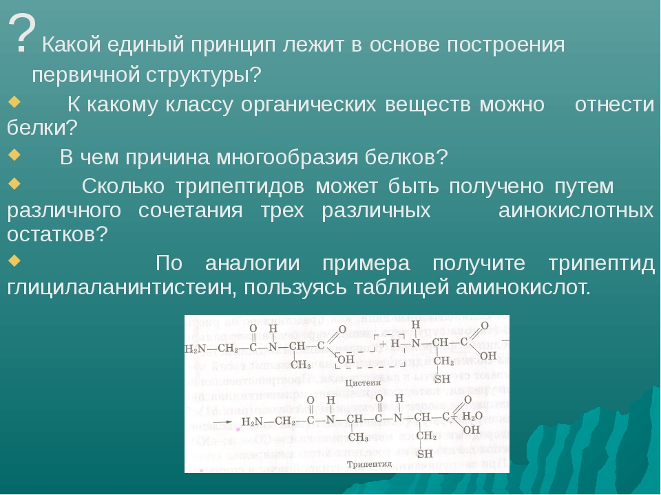 ? Какой единый принцип лежит в основе построения первичной структуры? К како...