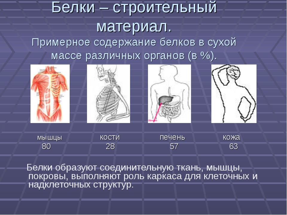Все о белковых телах