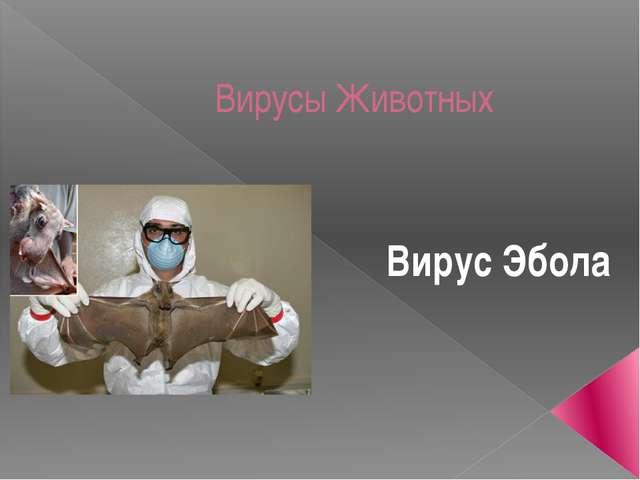 Вирусы Животных Вирус Эбола