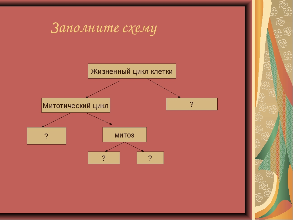 Заполните схему Жизненный цикл клетки Митотический цикл ? ? митоз ? ?