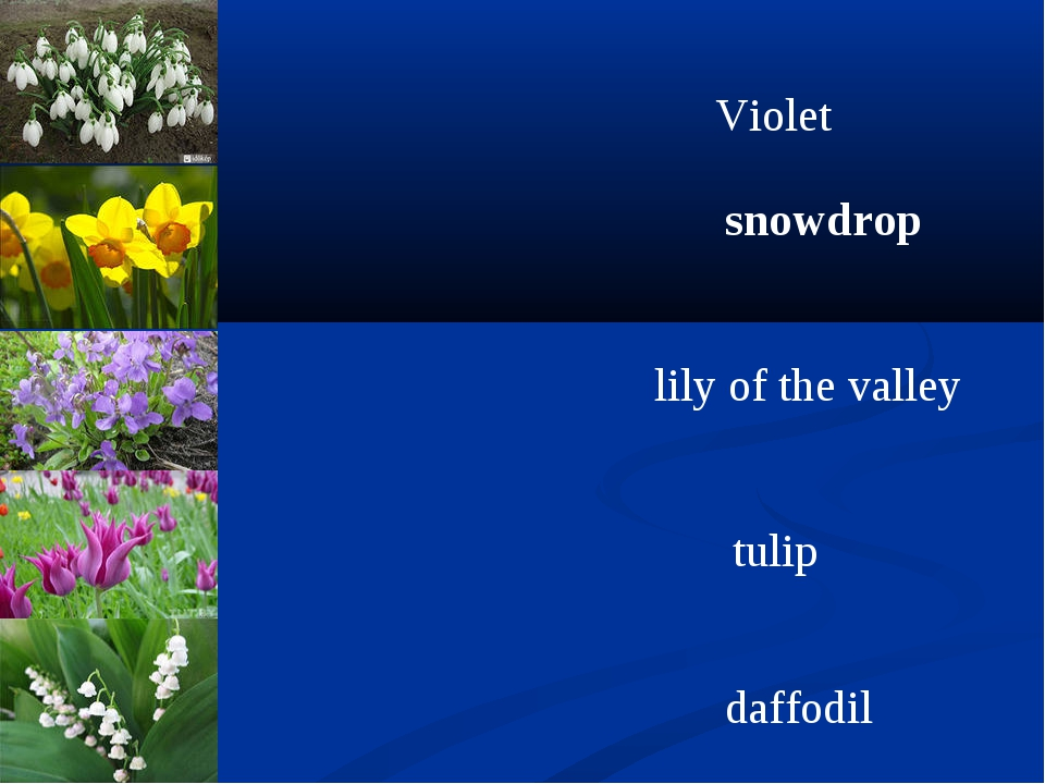 Violet snowdrop lily of thе valley tulip daffodil