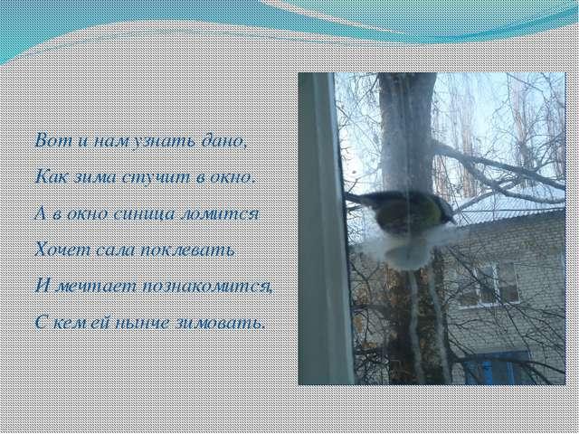 Вот и нам узнать дано, Как зима стучит в окно. А в окно синица ломится Хочет...