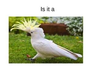 Is it a