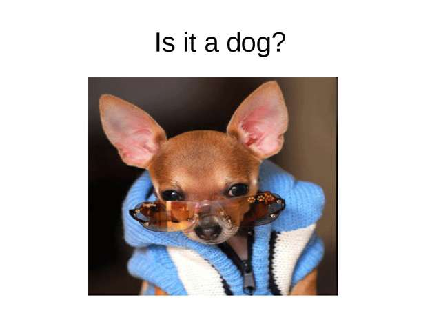 Is it a dog?