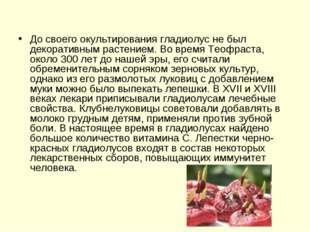 До своего окультирования гладиолус не был декоративным растением. Во время Те