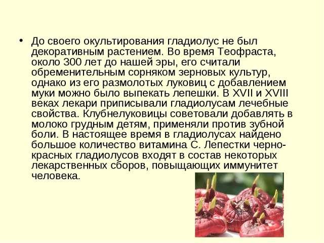 До своего окультирования гладиолус не был декоративным растением. Во время Те...