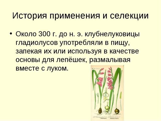 История применения и селекции Около 300 г. до н. э. клубнелуковицы гладиолусо...