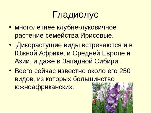 Гладиолус многолетнее клубне-луковичное растение семейства Ирисовые. Дикораст...