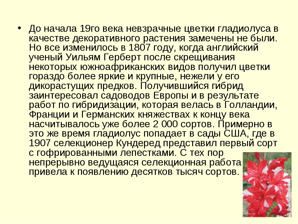 До начала 19го века невзрачные цветки гладиолуса в качестве декоративного рас...