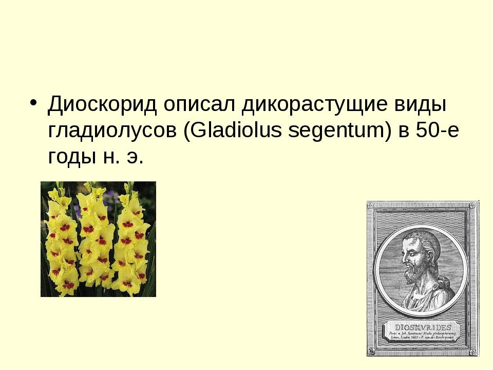 Диоскорид описал дикорастущие виды гладиолусов (Gladiolus segentum) в 50-е го...