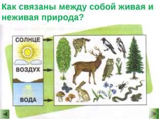 Как связаны между собой живая и неживая природа?