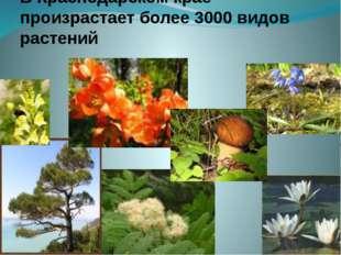 Объясняется такое богатство растительного мира – разнообразием природных усло