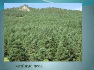 Черноморское побережье Кавказа благодаря тёплому климату украшает пышная субт