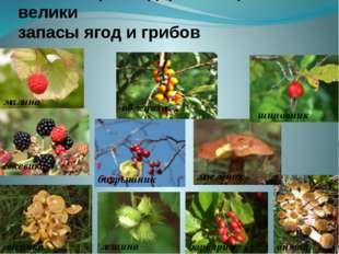 Павловский район богат не только растительным, но и животным миром. Растения: