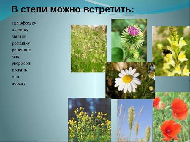 Современная степь вся распахана и занята посевами культурных растений
