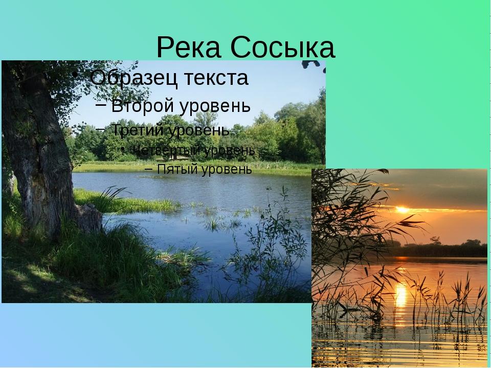 В реке очень много рыб: карасей, окуней, сазана, тарани. окунь