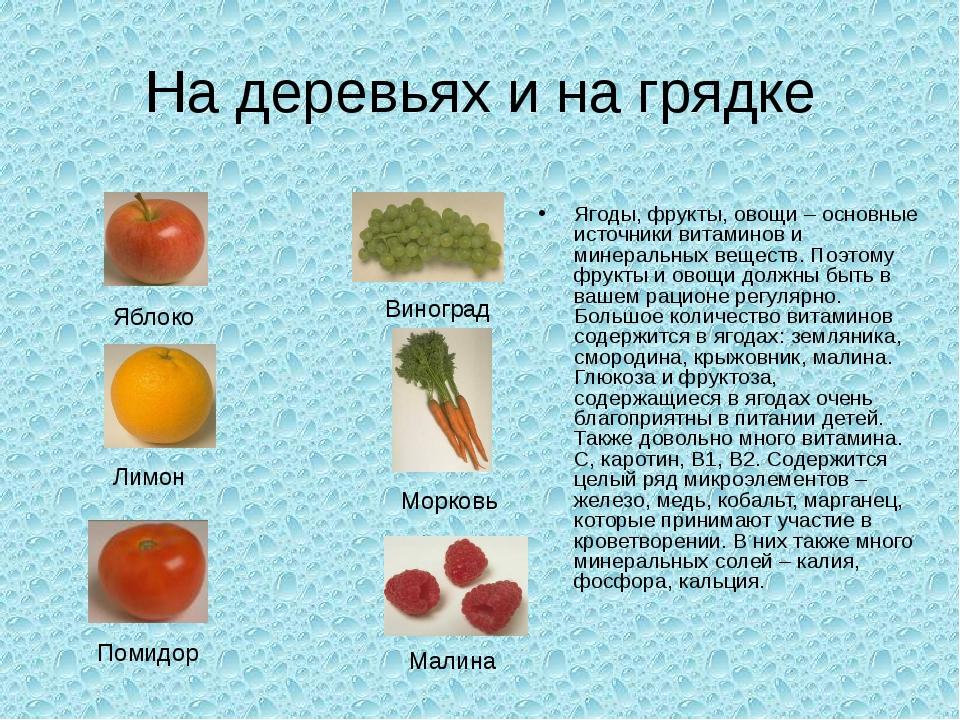 На деревьях и на грядке Ягоды, фрукты, овощи – основные источники витаминов и...