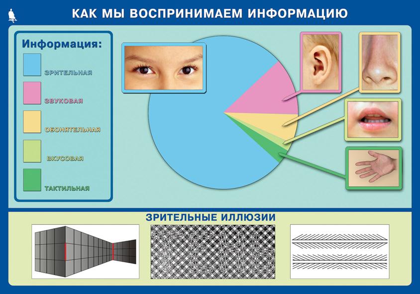 D:\tt\для уроков из сети\от БТ\босова\Bosova_5-7\Плакаты\Как мы воспринимаем информацию.jpg