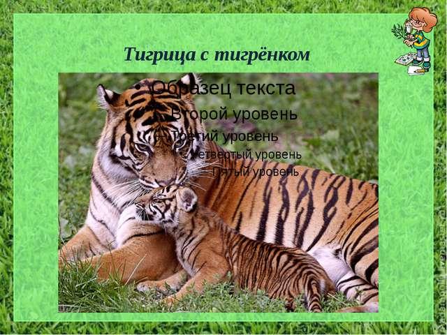 Тигрица с тигрёнком