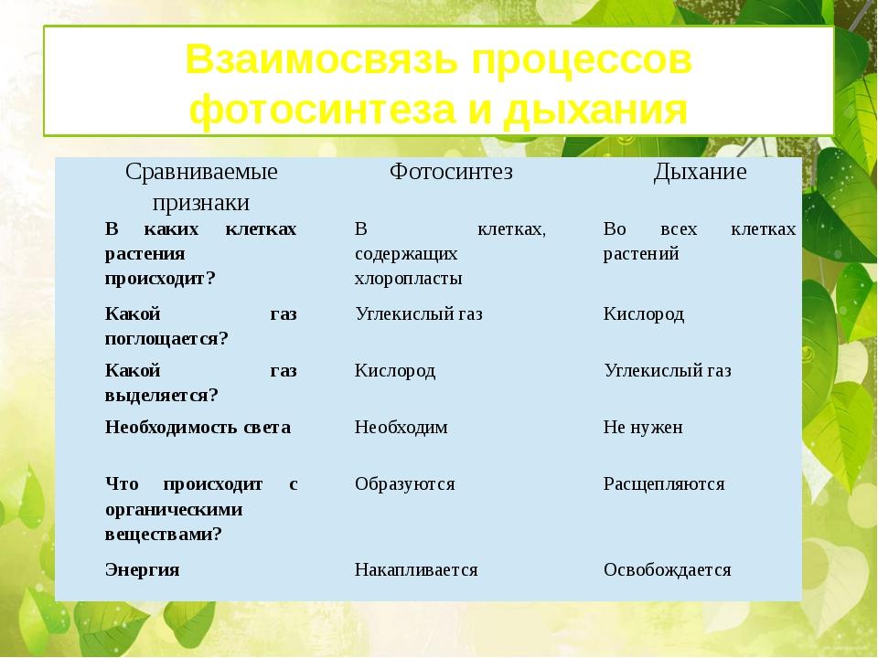 Взаимосвязь процессов фотосинтеза и дыхания Сравниваемые признаки Фотосинтез...