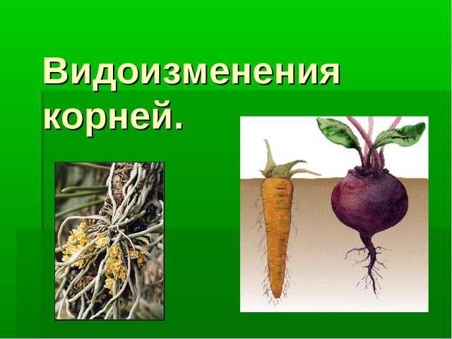 Видоизменения корней.