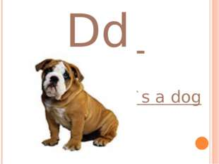 Dd it`s a dog