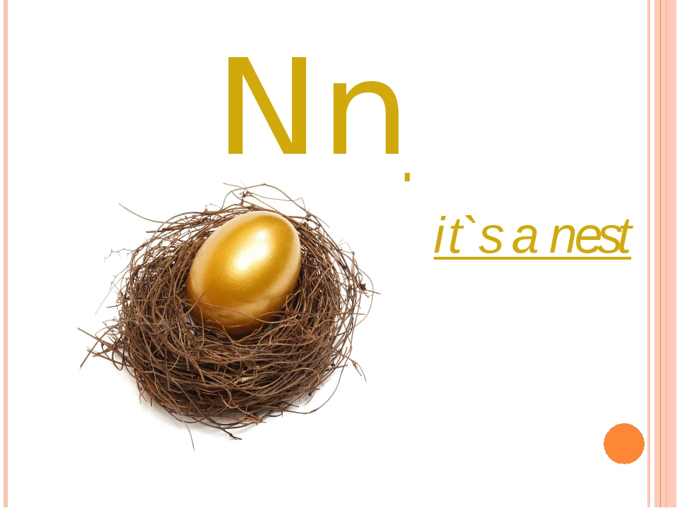 Nn it`s a nest