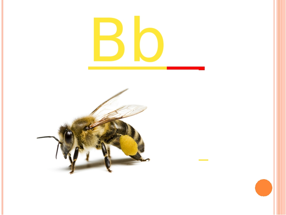 Bb it`s a bee