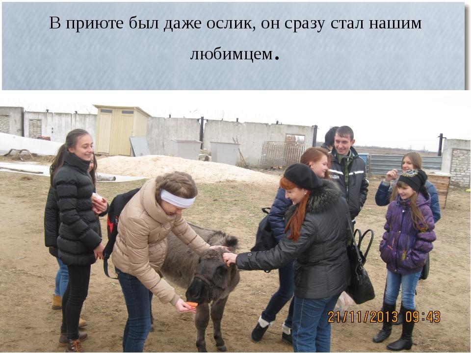 В приюте был даже ослик, он сразу стал нашим любимцем.