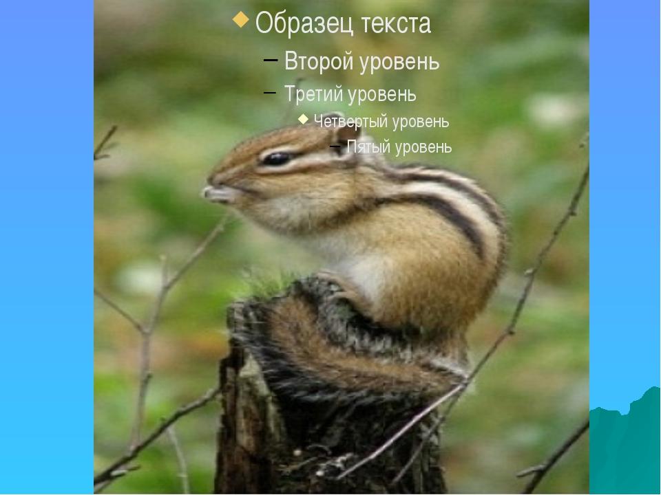 Флора и фауна реки Чусовой