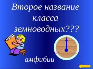 Второе название класса земноводных??? амфибии Welcome to Power Jeopardy © Don
