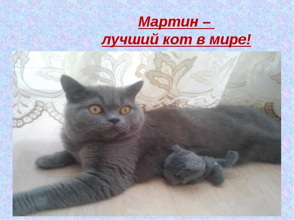 Мартин – лучший кот в мире!