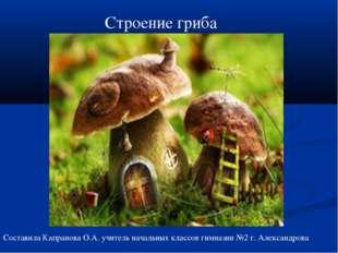 Строение гриба Составила Капранова О.А. учитель начальных классов гимназии №2