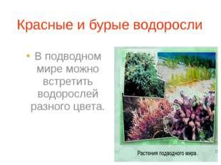 Красные и бурые водоросли В подводном мире можно встретить водорослей разного
